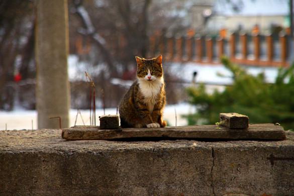 Кошка возле пятиэтажки.