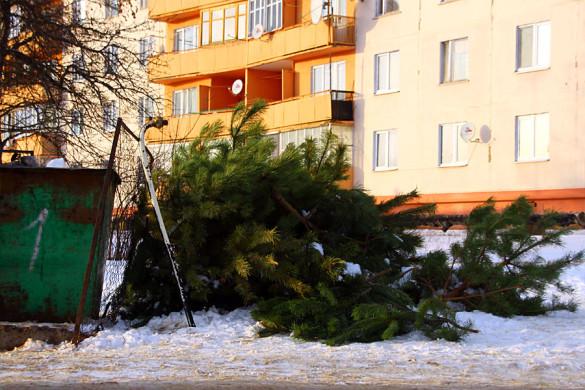 В Малоархангельске начали потихоньку выносить ёлки.