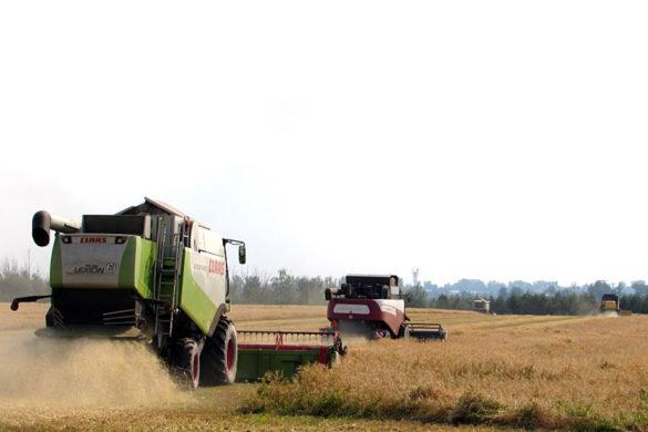 Уборка урожая зерновых в Дубовицком.